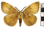 view Gypsy Moth digital asset number 1