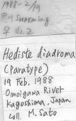 view Hediste diadroma digital asset number 1