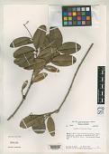 view Guapira reticulata Alain digital asset number 1