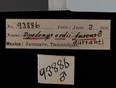 view Dipodomys ordii durranti Setzer, 1952 digital asset number 1