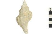 view Fossil Snail digital asset number 1