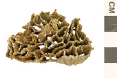 view Fossil Tabulate Coral digital asset number 1