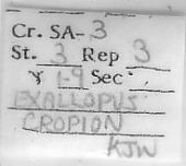 view Exallopus cropion digital asset number 1