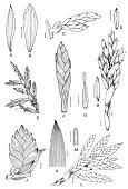 view Tillandsia heterophylla É. Morren digital asset number 1