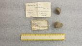 view Stylophyllopsis polyactis digital asset number 1