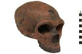 view La Chapelle-aux-Saints, Neanderthal Man, Fossil Hominid digital asset number 1