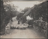 view Travel and Reference Photos, England digital asset: Travel and Reference Photos, England