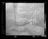 view Emil Carlsen and Carlsen family photographs digital asset: Glass Plate Negatives