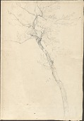 view Drawings of Trees digital asset: Drawings of Trees