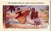 view The Florida Pelican--Very fond of Children [photomechanical postcard] digital asset: The Florida Pelican--Very fond of Children [photomechanical postcard]