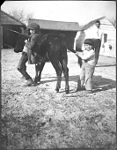 view Johnson brothers with calf digital asset: Johnson brothers with calf