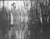 view Swamp Hunting Grounds, Chickahominy River digital asset: Swamp Hunting Grounds, Chickahominy River