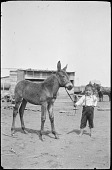view Waldo Thomas and mule colt digital asset: Waldo Thomas and mule colt