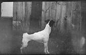 view Edward Hatchett's dog digital asset: Edward Hatchett's dog