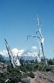 view Llaima volcano in summer digital asset: Llaima volcano in summer