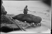 view Yuit (Siberian Yup'ik) Men Walrus Hunting digital asset: Yuit (Siberian Yup'ik) Men Walrus Hunting