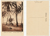 view Climbing Cocoanut Trees digital asset: Climbing Cocoanut Trees