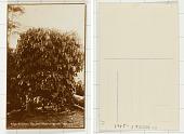 view Coffee Tree digital asset: Coffee Tree