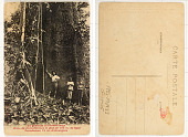 view Un géant de forêt-vierge digital asset: Un géant de forêt-vierge