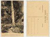 view Cueillette des noix palmistes dans la forêt digital asset: Cueillette des noix palmistes dans la forêt