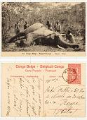 view 53 Congo Belge Eléphant digital asset: 53 Congo Belge Eléphant