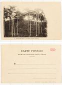 view 13. - Magna-Matadi Plantation de café et de cacao digital asset: 13. - Magna-Matadi Plantation de café et de cacao