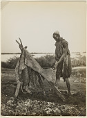 view Man tanning leather on the shores of the Nile, Anglo-Egyptian Sudan digital asset: Man tanning leather on the shores of the Nile, Anglo-Egyptian Sudan