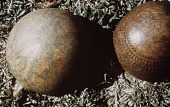 view Carved Gourds, Detail digital asset: Carved Gourds, Detail