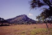 view A tree growing near Great Zimbabwe, Zimbabwe digital asset: A tree growing near Great Zimbabwe, Zimbabwe