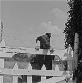 view Alan Paton's Dog, Natal, South Africa digital asset: Alan Paton's Dog, Natal, South Africa
