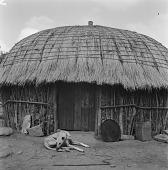 view Zulu Homestead digital asset: Zulu Homestead