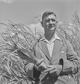 view W.L.J. Rensburg with cornstalks, Transkei (South Africa) digital asset: W.L.J. Rensburg with cornstalks, Transkei (South Africa)
