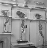 view Scientific specimens (bones) at the Onderstepoort Veterinary Research Institute, Pretoria (South Africa) digital asset: Scientific specimens (bones) at the Onderstepoort Veterinary Research Institute, Pretoria (South Africa)