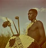 view Swazi warrior with shield, Nhlangano (Swaziland) digital asset: Swazi warrior with shield, Nhlangano (Swaziland)