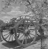 view Wagon Wheels, Little Karoo (South Africa) digital asset: Wagon Wheels, Little Karoo (South Africa)