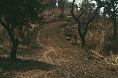 view New road between Sokerella site and Sirekude Village, Sirekude Village, Sierra Leone digital asset: New road between Sokerella site and Sirekude Village, Sirekude Village, Sierra Leone