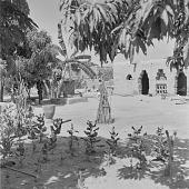 view Courtyard with plants in Kolokani, Mali digital asset: Courtyard with plants in Kolokani, Mali