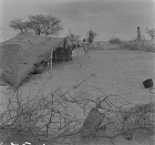 view Maure tent, north of Tombouctou, Mali digital asset: Maure tent, north of Tombouctou, Mali