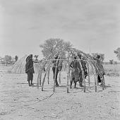 view Peul (Fula) women constructing tents at an encampment near Mopti, Mali digital asset: Peul (Fula) women constructing tents at an encampment near Mopti, Mali