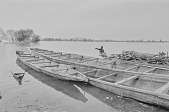 view A man pointing to large dugout canoes on the Kainji Reservoir, Kainji Reservoir region, Nigeria digital asset: A man pointing to large dugout canoes on the Kainji Reservoir, Kainji Reservoir region, Nigeria