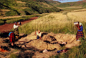 view Basotho women processing grain, Southeast of Roma, Lesotho digital asset: Basotho women processing grain, Southeast of Roma, Lesotho