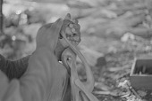 view Hands of Makonde wood carver, Dar es Salaam, Tanzania digital asset: Hands of Makonde wood carver, Dar es Salaam, Tanzania