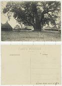 view Guinée Française Village Bassari et baobab digital asset: Guinée Française Village Bassari et baobab