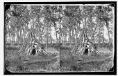 view Man standing next to temporary Native lodge made of fallen timber digital asset: Man standing next to temporary Native lodge made of fallen timber