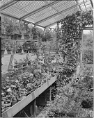 view Miscellaneous Greenhouses digital asset: Miscellaneous Greenhouses