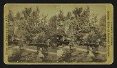 view [walkway with urns in front, house hidden by trees] digital asset: [walkway with urns in front, house hidden by trees]
