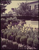 view Unidentified Iris Garden digital asset: Unidentified Iris Garden