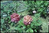 view Unidentified Garden in Unknown Location digital asset: Unidentified Garden in Unknown Location