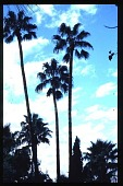 view Phoenix -- Las Palmas Altas digital asset: Phoenix -- Las Palmas Altas