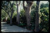 view Los Angeles -- Davis-Yust Garden digital asset: Los Angeles -- Davis-Yust Garden